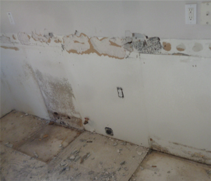 White wall with mold growing on it