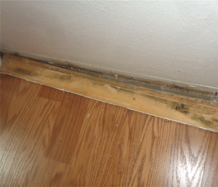 baseboards of a wall pulled back and mold has grown on it as well as the a wall it was removed from