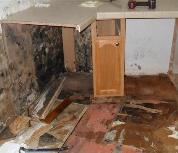 Black mold growth inside kitchen cabinet